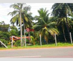 Land for Sale in Nattandiya (110 perches)